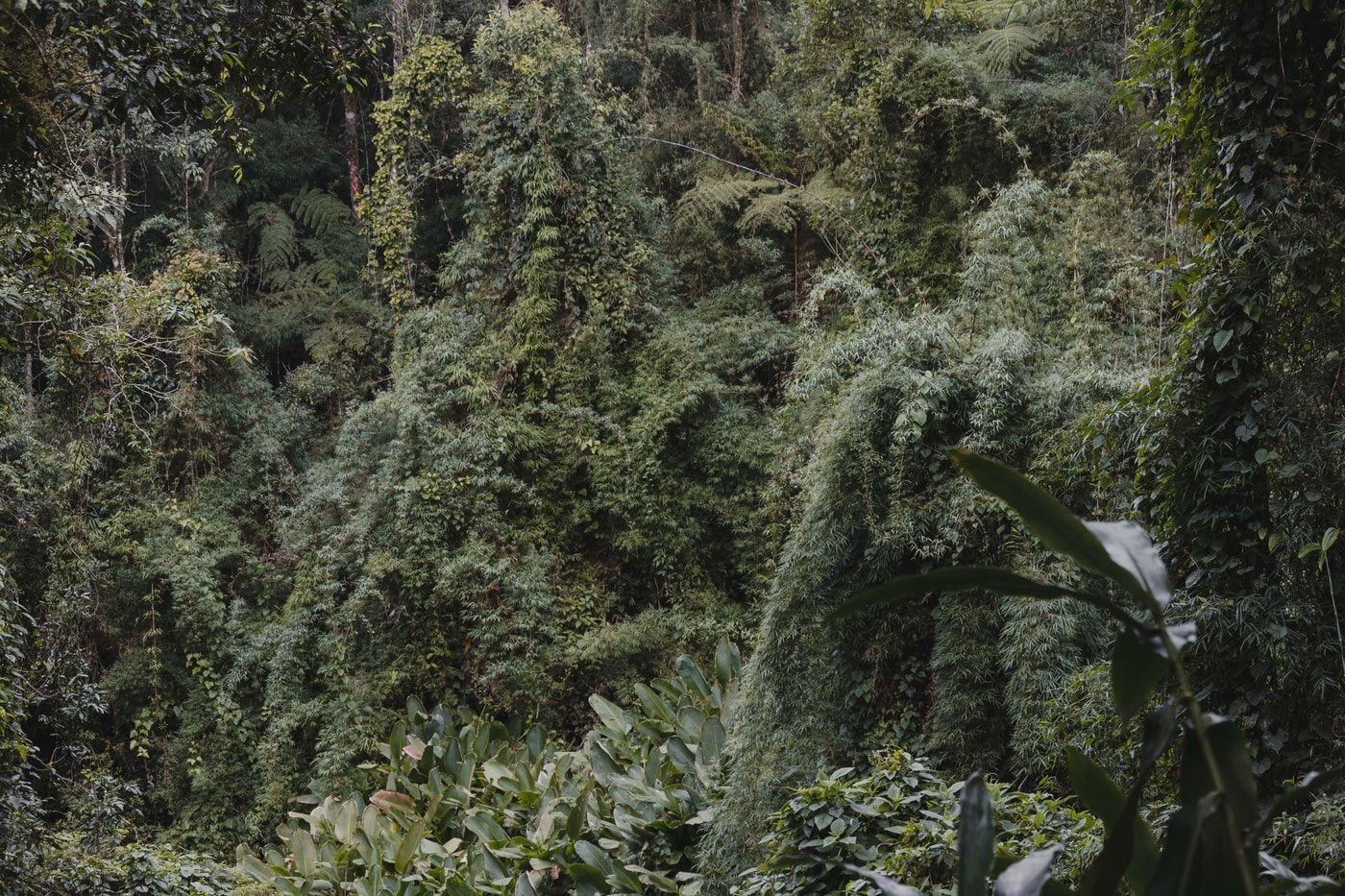 Um Oásis verde em Nova Friburgo