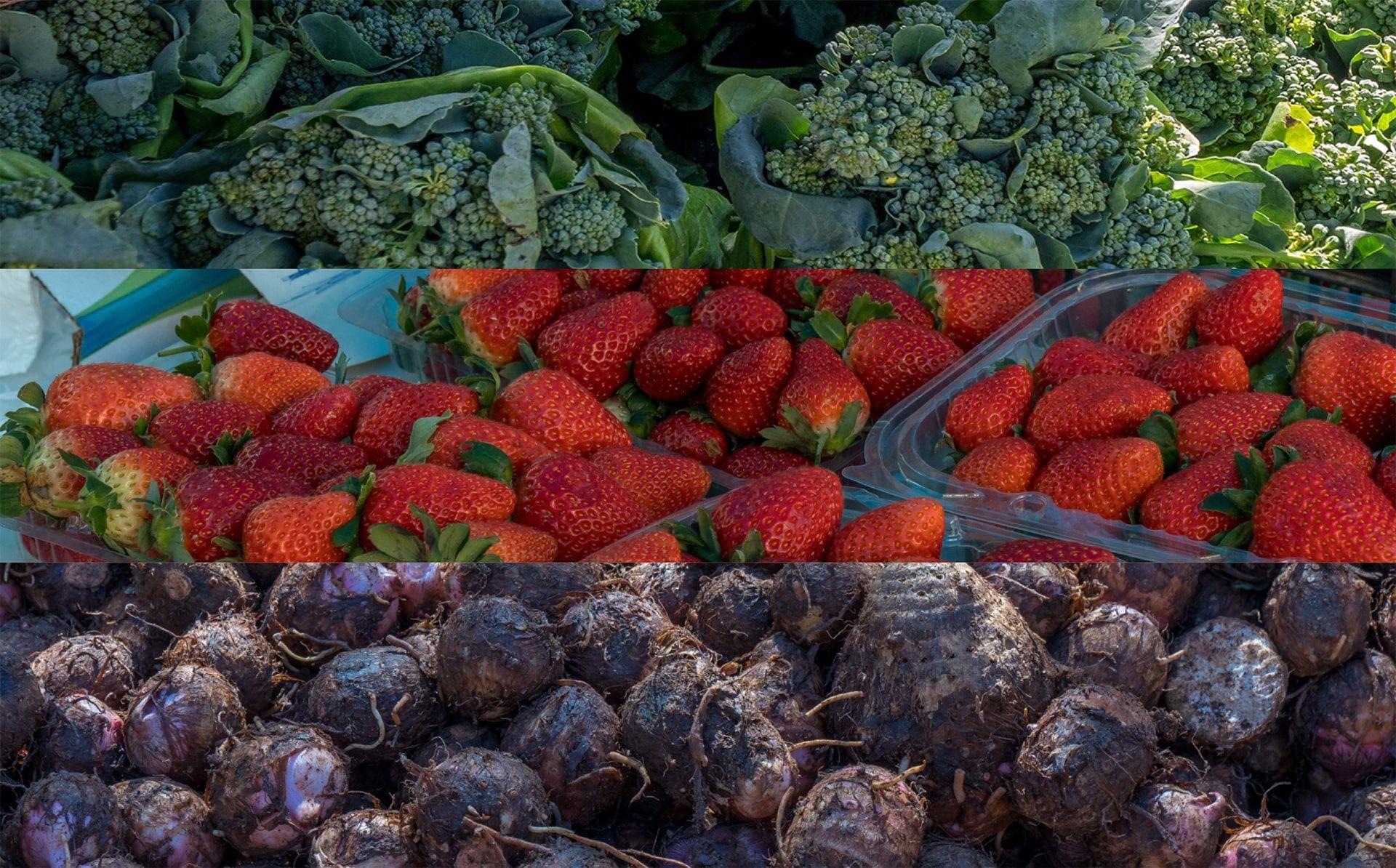 Alimentos de Nova Friburgo frescos