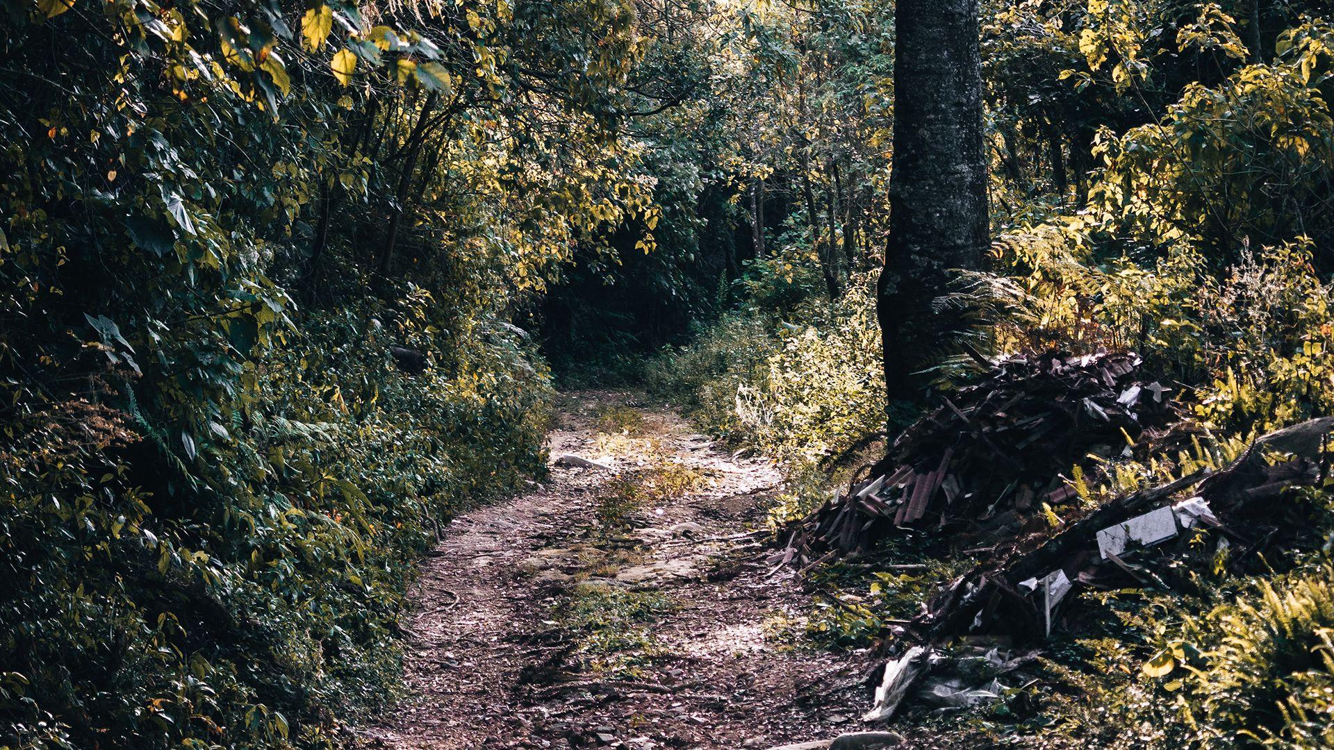 Caminhando entre verde